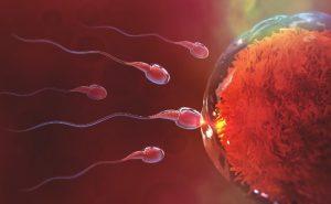 טיפולי פוריות - שלבי תהליך הפריה חוץ גופית (IVF)